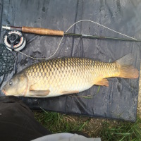 Carp on the fly